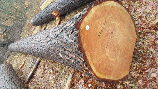 Kiefer-Kiefernholz-Heart Holz-Beitragsbild