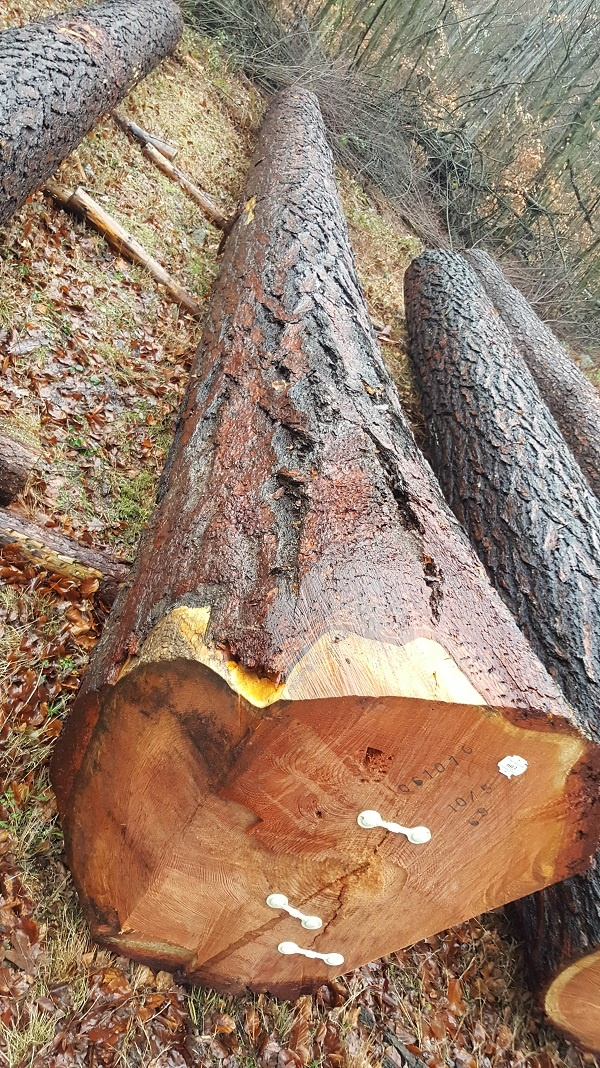 Lärchenholz-Heart Holz.com-Lärche